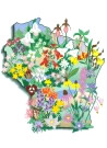 WI wildflowers