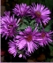 Aster 2237