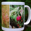 mug DS-068 Geum triflorum, prairie-smoke 7106