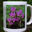 mug DS-074 Dodecatheon meadia 7110
