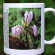 mug DS-075 Dodecatheon meadia 7111