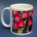 mug386 aronia red chokeberry 0844