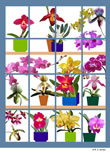 orchid window.jpg